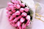 Примета голубь залетел в окно